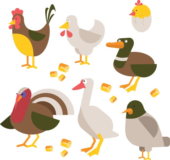 21-vectorstock-domestic_birds