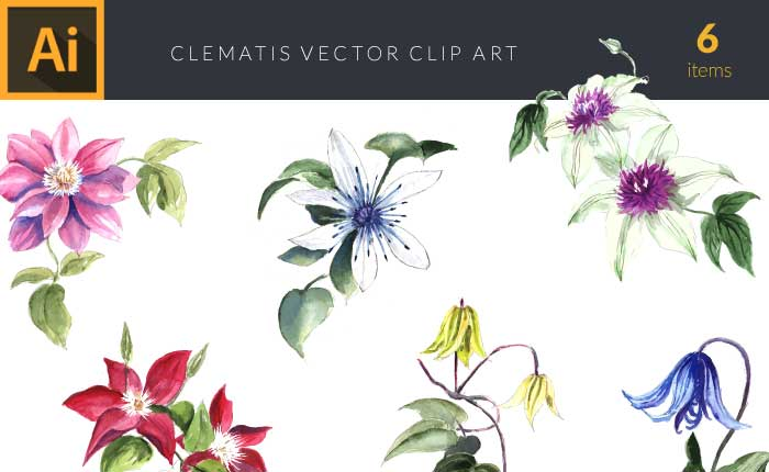 design-tnt-clematis-set-1-small-preview