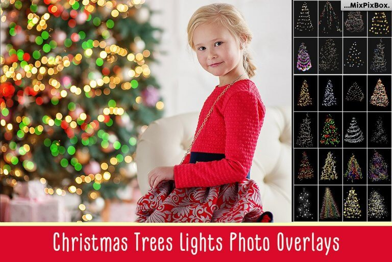 christmas-trees-first-image-768x514