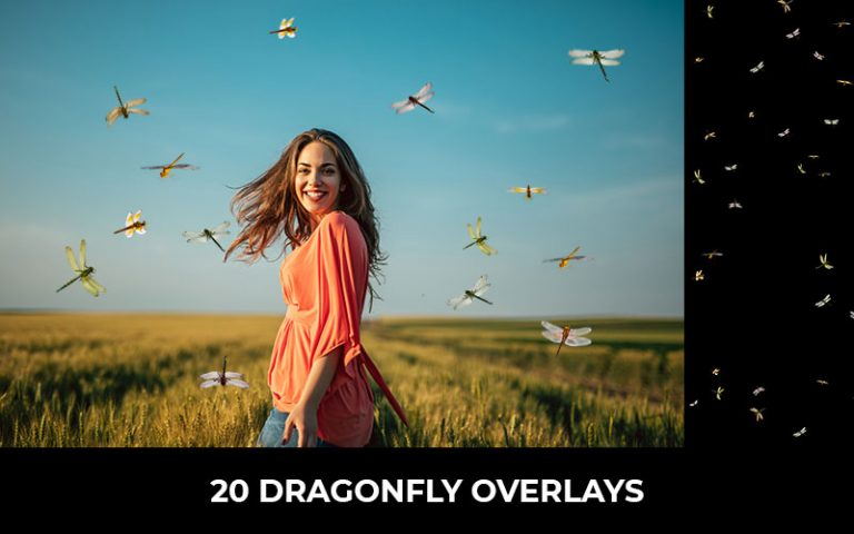 20-Dragonfly_overlays